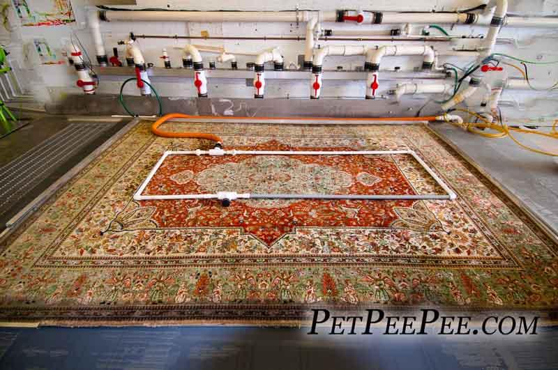 Oriental rug Urine Odor removal using